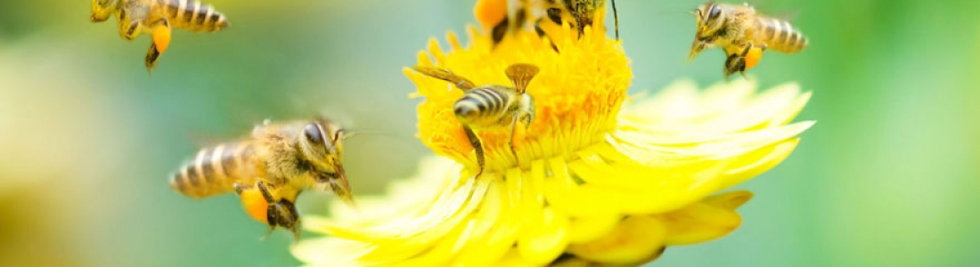 La Biodiversité: définition, enjeux, menaces