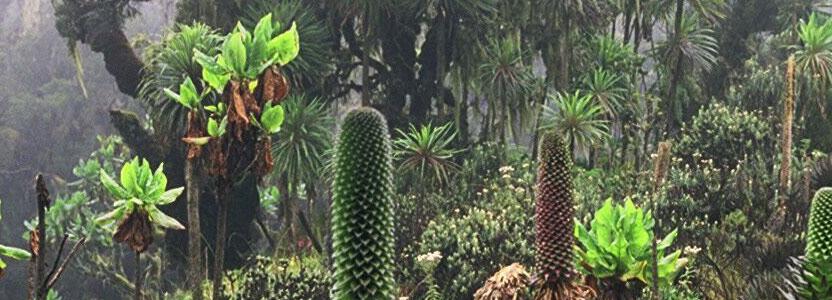Le concept d'écosystème en écologie
