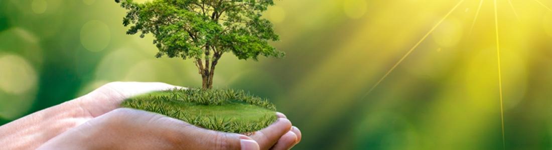 Idées cadeaux : pourquoi ne pas offrir un arbre en cadeau