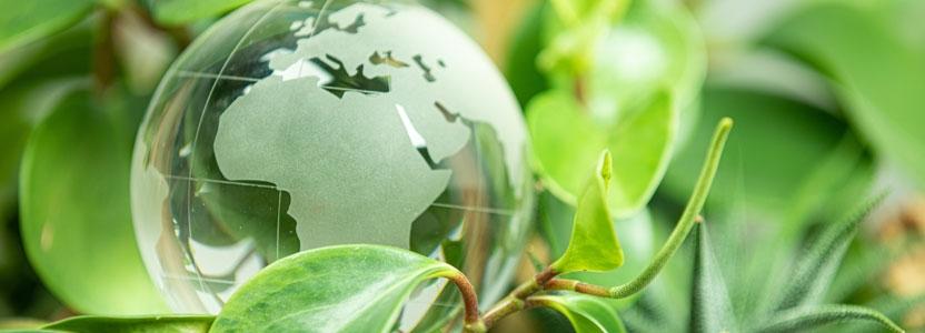 Qu'est-ce qu'un diplôme en sciences de l'environnement et comment l'obtenir ?