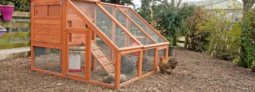 Installation de poulailler pour un élevage de poulets bio